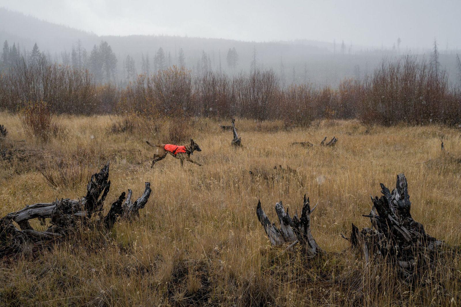 Un perro rastreador recorre el terreno