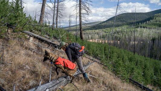 Los perros ponen su olfato al servicio de la fauna y flora silvestres