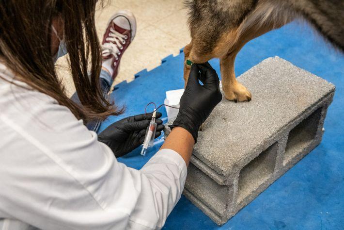 Las investigadoras toman muestras de sangre y saliva