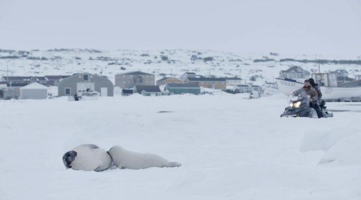 Una foca de Groenlandia alimenta a su cría