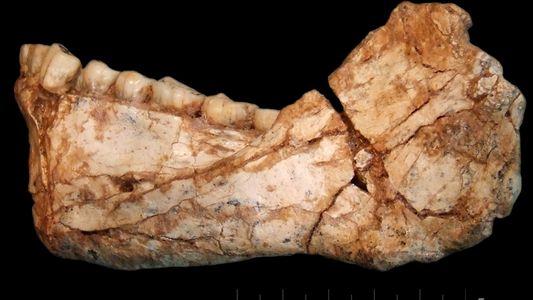 Estos primeros humanos vivieron hace 300.000 años pero tenían facciones de rostros modernos