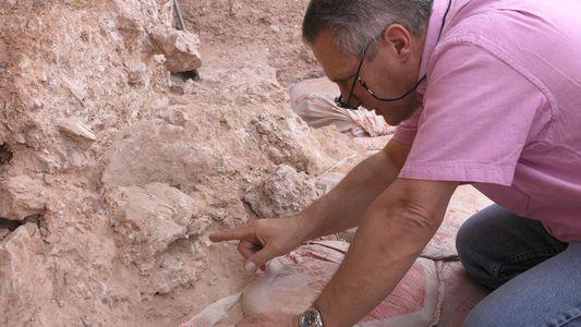 Increíbles fósiles de homínidos hallados en las excavaciones de Jebel Irhoud