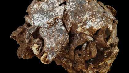 Descubren la tumba más antigua de África, que contiene los restos de un niño