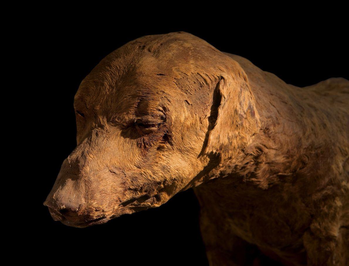Perro momificado