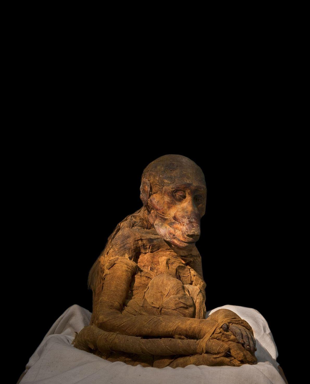Babuino momificado