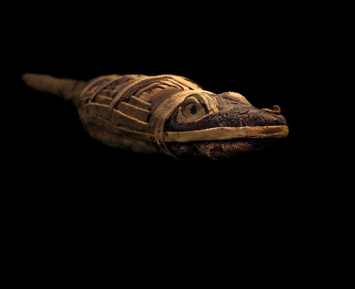 Momia de cocodrilo