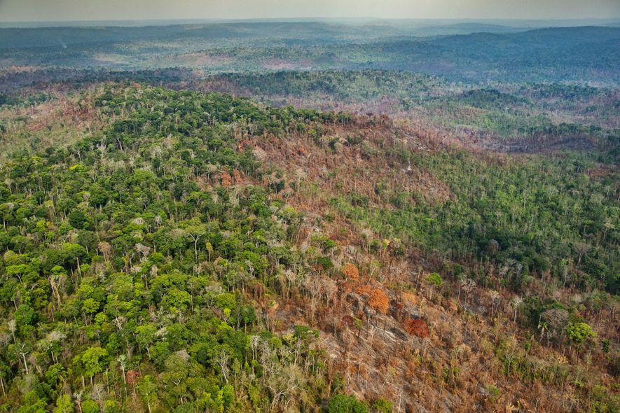 Los incendios han dañado el núcleo del territorio indígena Araribóia, que alberga entre 60 y 80 ...