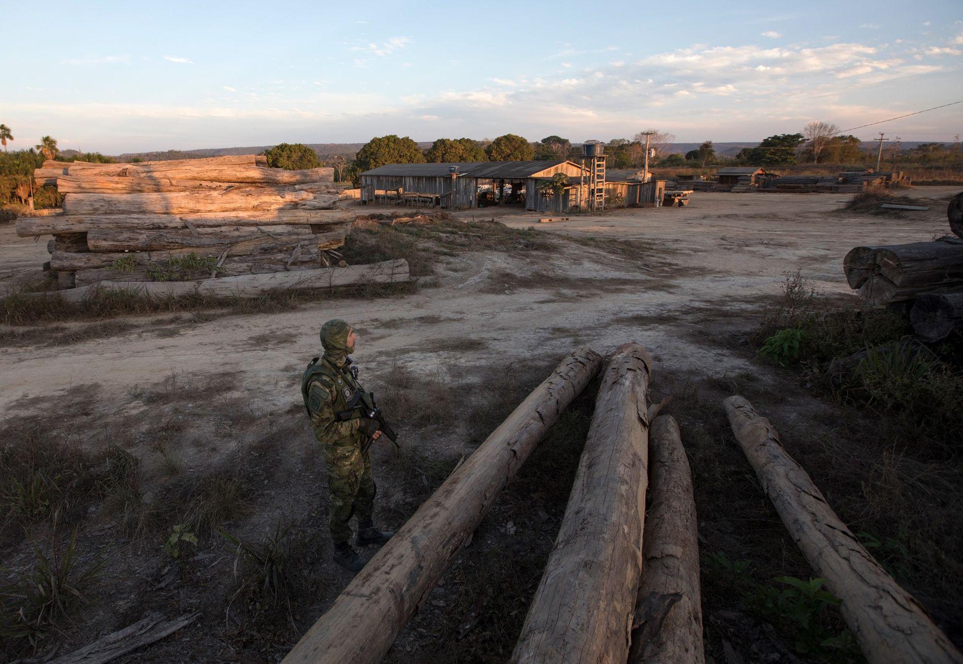 Un agente del IBAMA vigila un aserradero de Boa Vista do Pacarana, Rondonia. En julio de ...