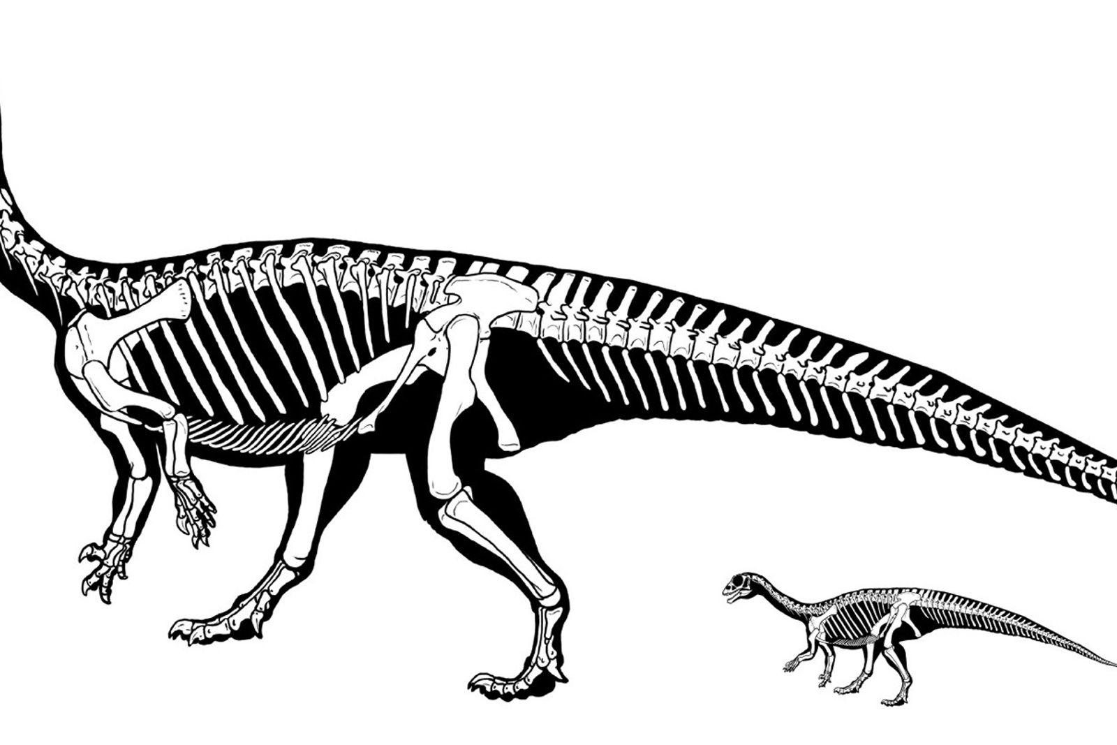 Mussaurus patagonicus