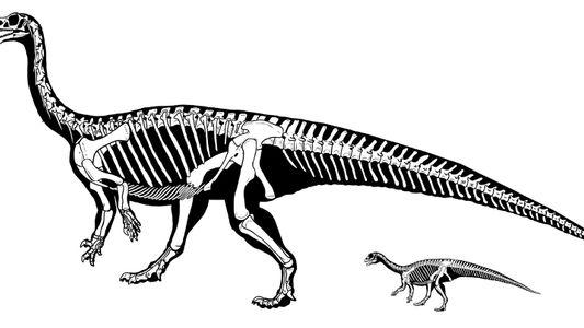 Al igual que los humanos, este dinosaurio gateaba antes de andar