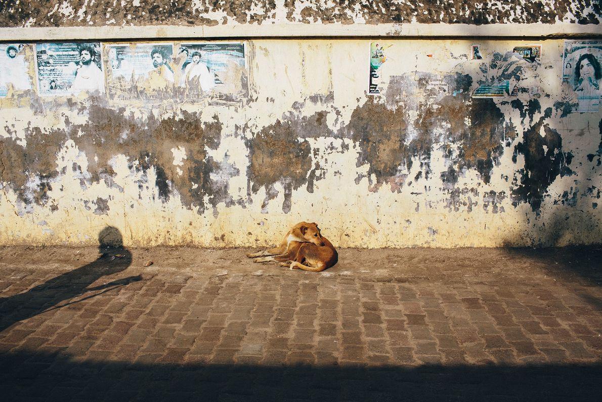 Perro callejero en Uttar Pradesh