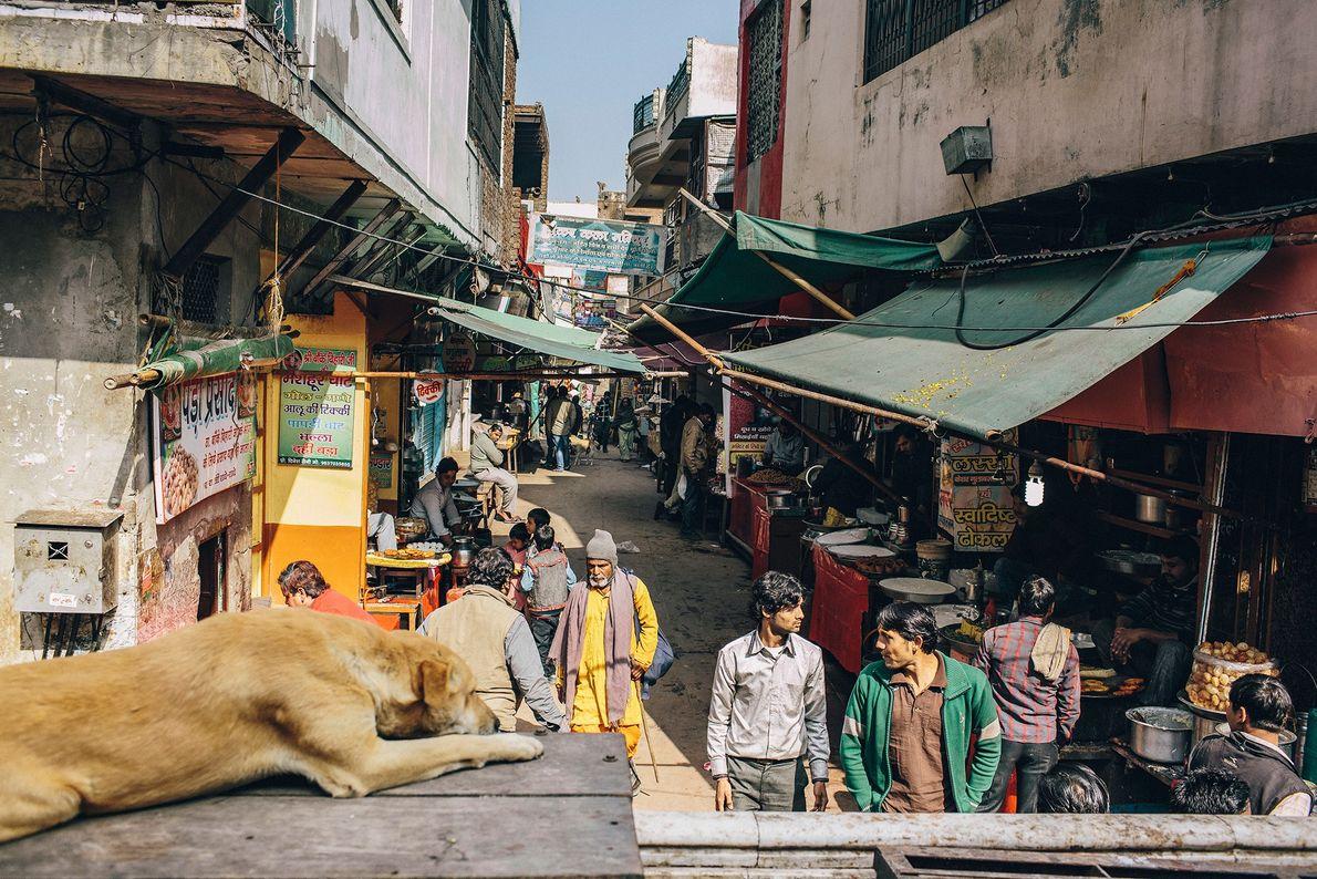 Un perro en Uttar Pradesh