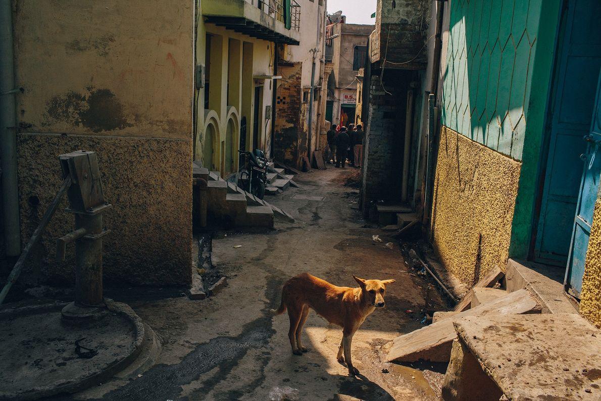 Perro en Agra