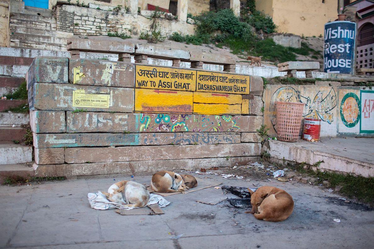 Perros durmiendo en Varanasi