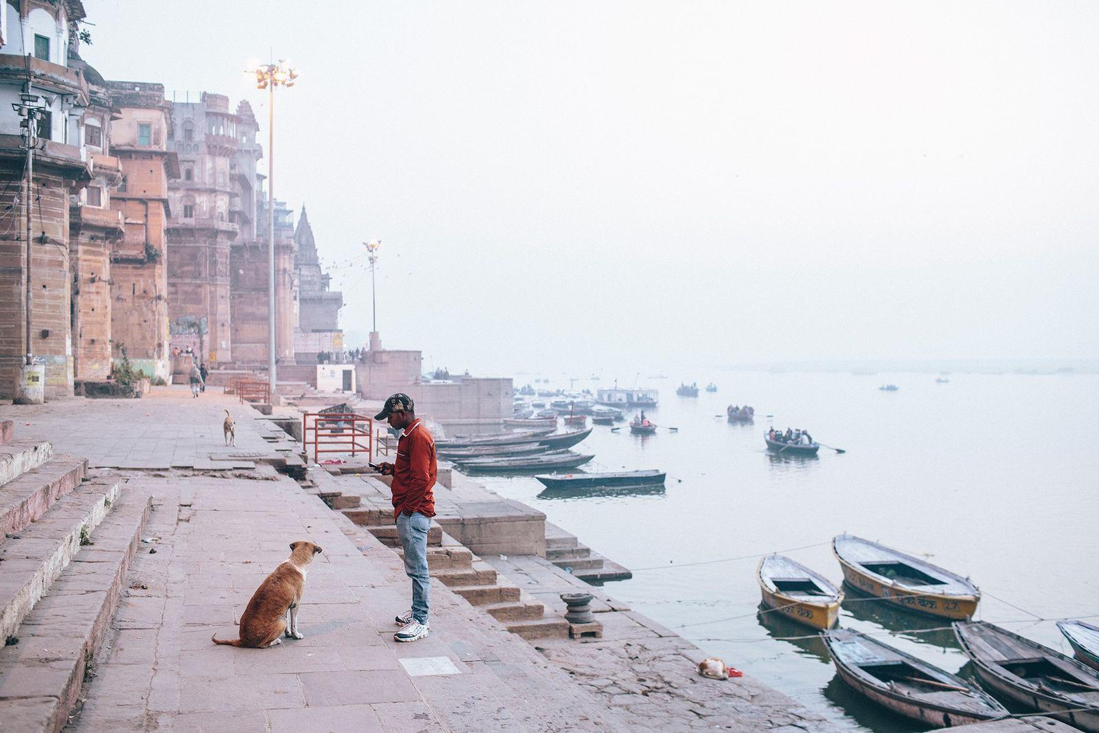Los perros callejeros de la India