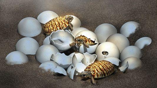 Por qué es tan impresionante el descubrimiento de un feto de tortuga gigante fosilizado