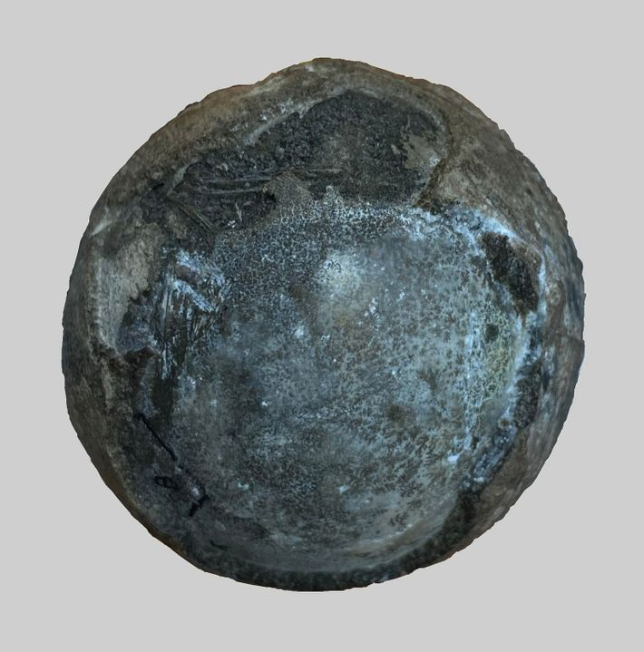 Huevo fosilizado