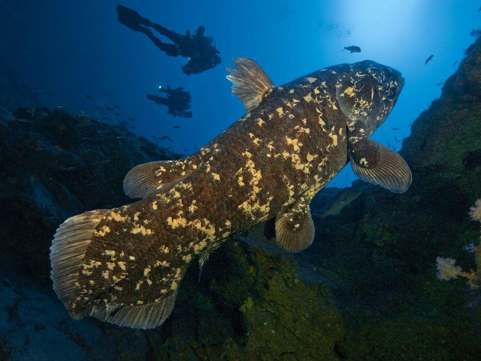 Estos peces primitivos de aguas profundas viven hasta los 100 años