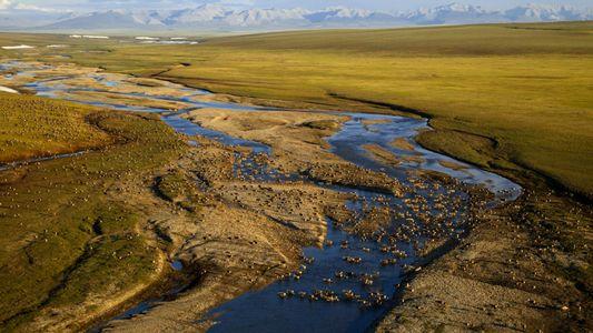 Suspenden las perforaciones de petróleo en el Refugio Nacional de Vida Silvestre del Ártico, pero aún ...