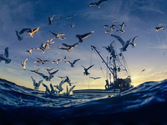 ¿Cómo podemos ayudar a los corales y las aves marinas a sobrevivir al calentamiento global?