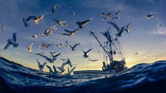 Las aves marinas vuelan cerca de un barco de pesca en el golfo de Alaska