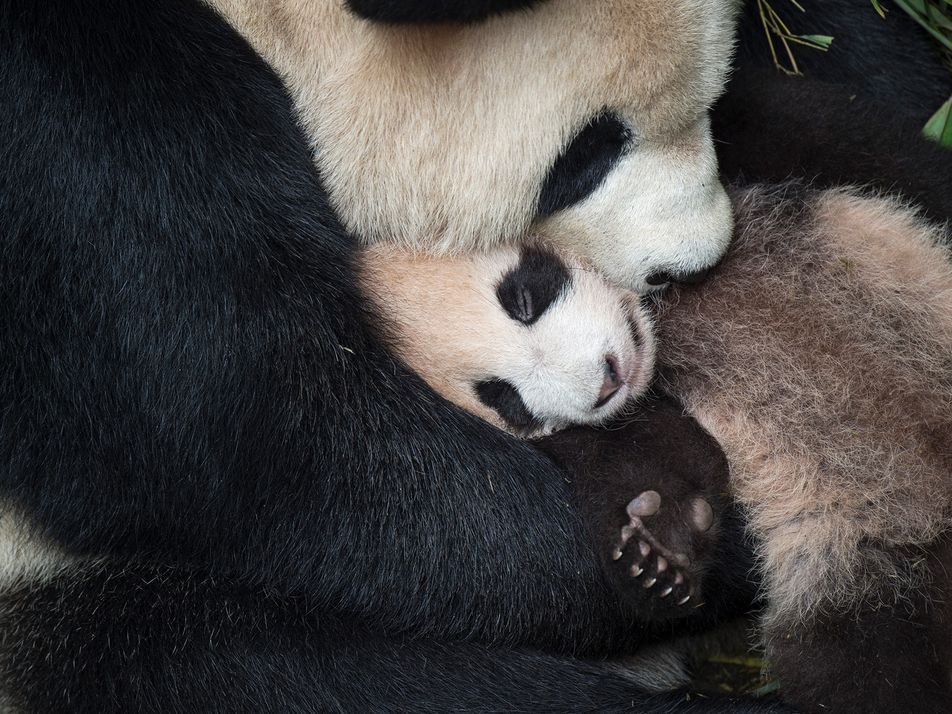 Momentos tiernos entre madres animales y sus crías