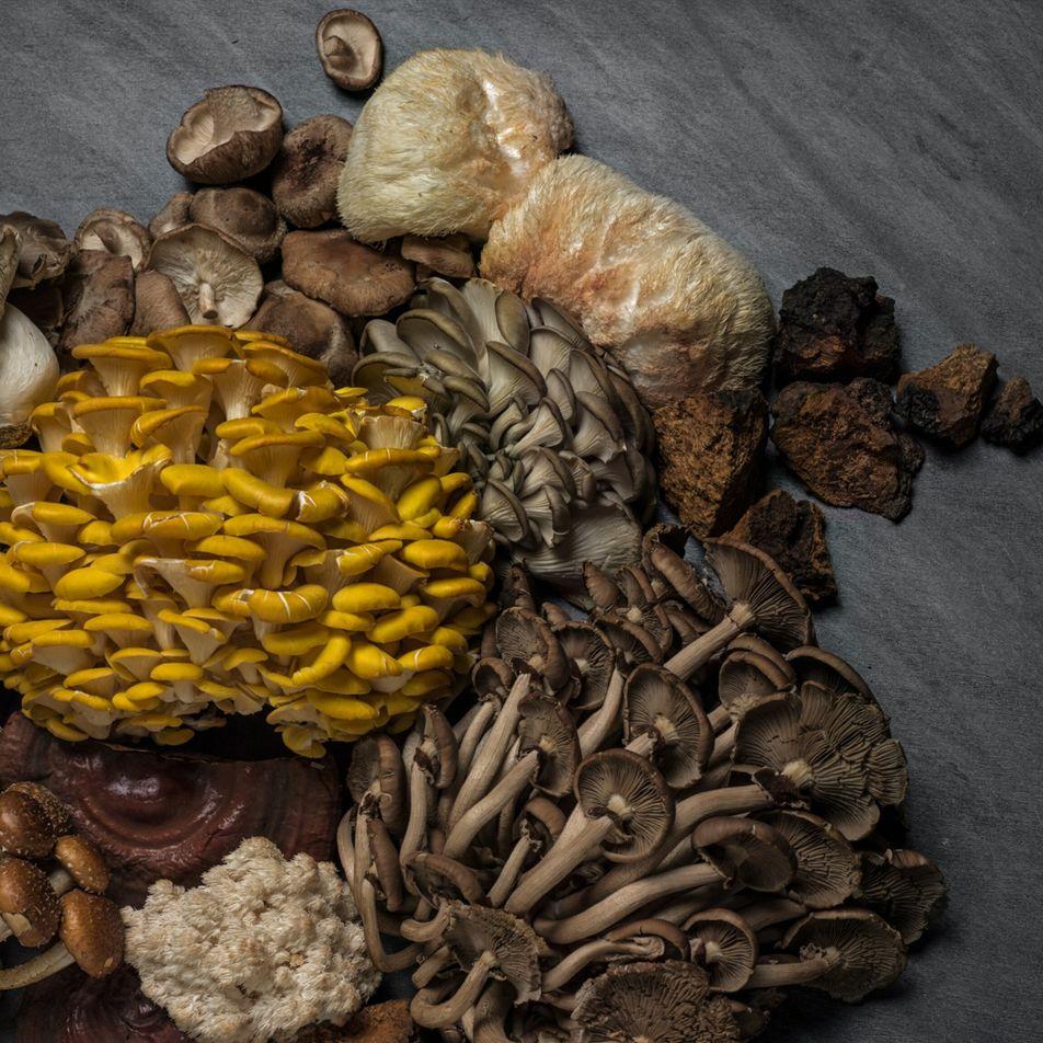 Los hongos son fundamentales para nuestra supervivencia. ¿Los estamos protegiendo?