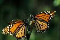 Un grupo de investigadores españoles ha desvelado una mayor presencia en las ciudades de especies que se ...