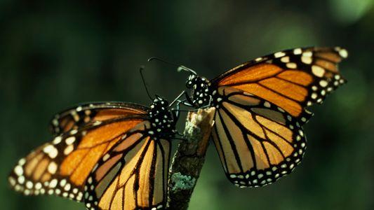El confinamiento aumenta la presencia de insectos polinizadores en las ciudades