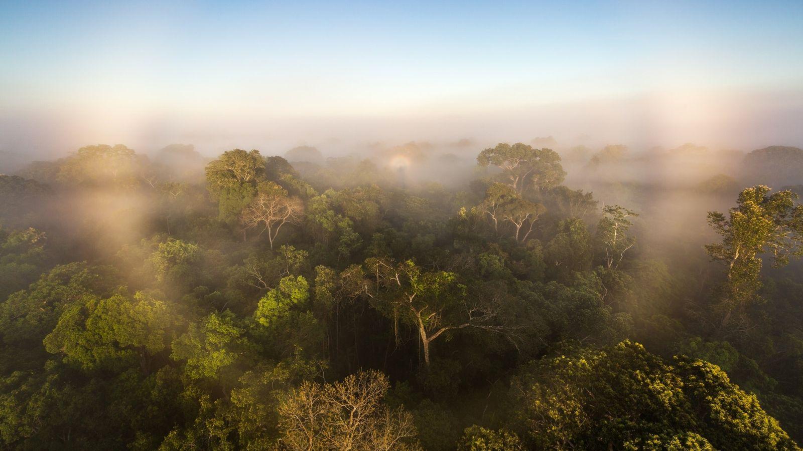 Fotografía de la selva amazónica