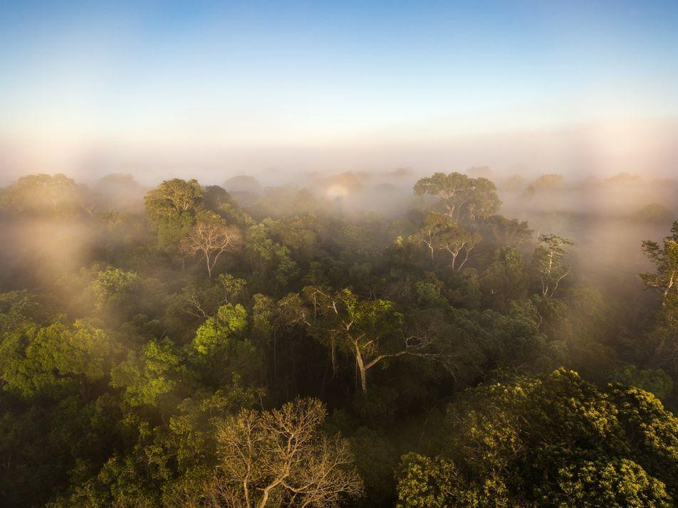 El primer estudio de los gases de efecto invernadero de la selva amazónica sugiere que está ...