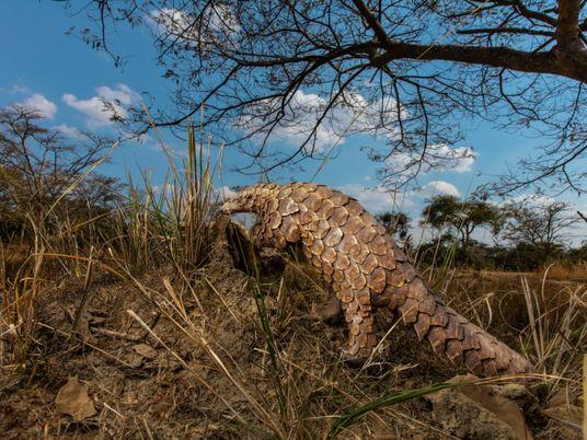 Las incautaciones de fauna silvestre han disminuido, pero pronto podría dispararse el tráfico ilegal