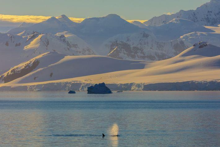 Chorro de orca de tipo B