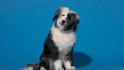 Los perros entienden los elogios de la misma forma que nosotros