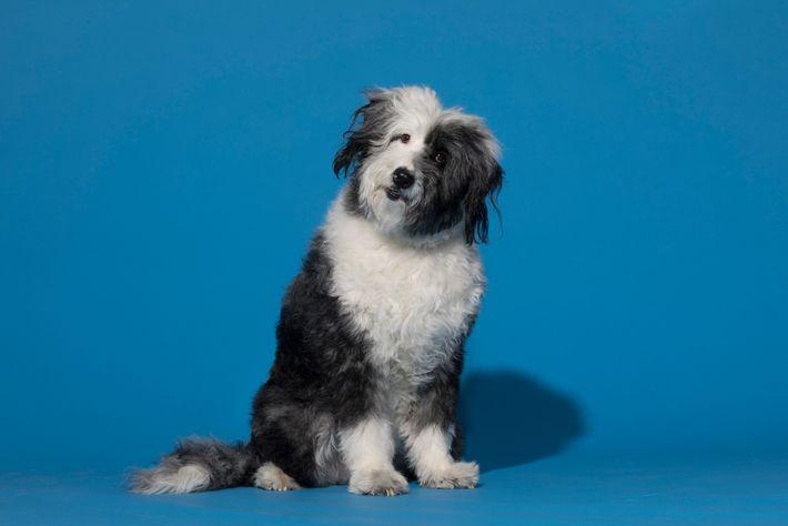 Fotografía de un perro