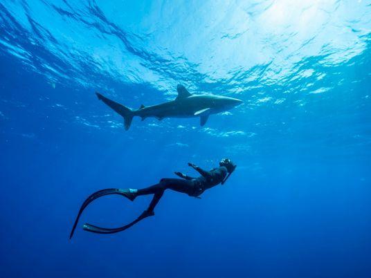 Esto es lo que pueden aprender los niños de los tiburones