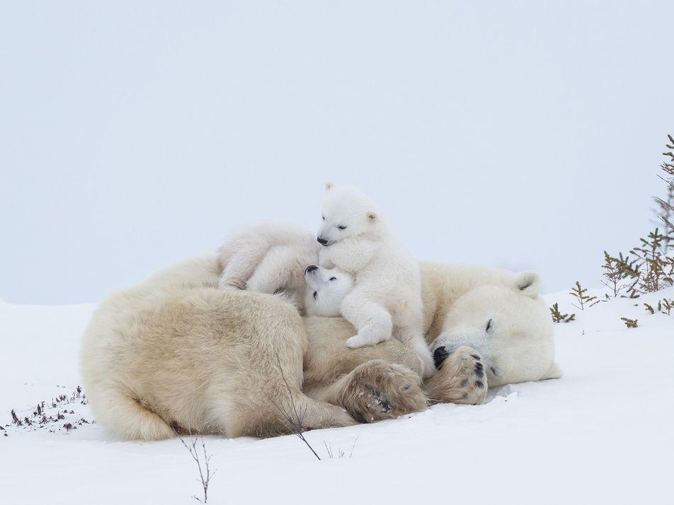 Veinte momentos adorables entre madres animales y sus crías
