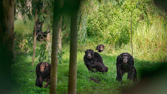 De la fuerza bruta a la democracia: así eligen los animales a sus líderes