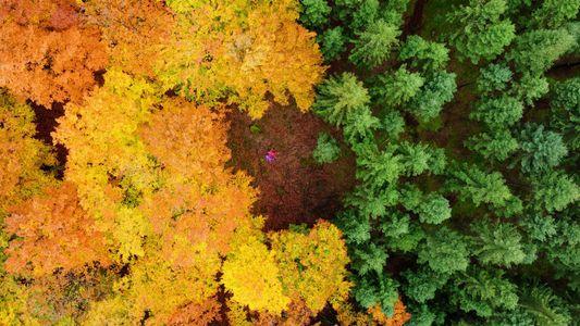 Los colores otoñales en 37 fotografías