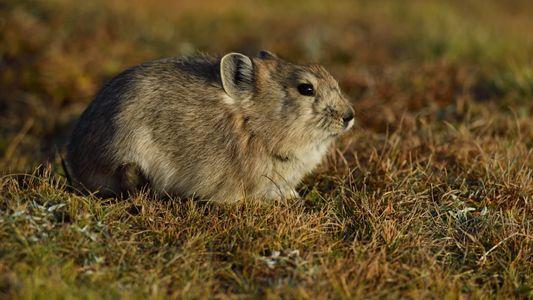 Estos animales diminutos tienen una estrategia inusual para sobrevivir al invierno