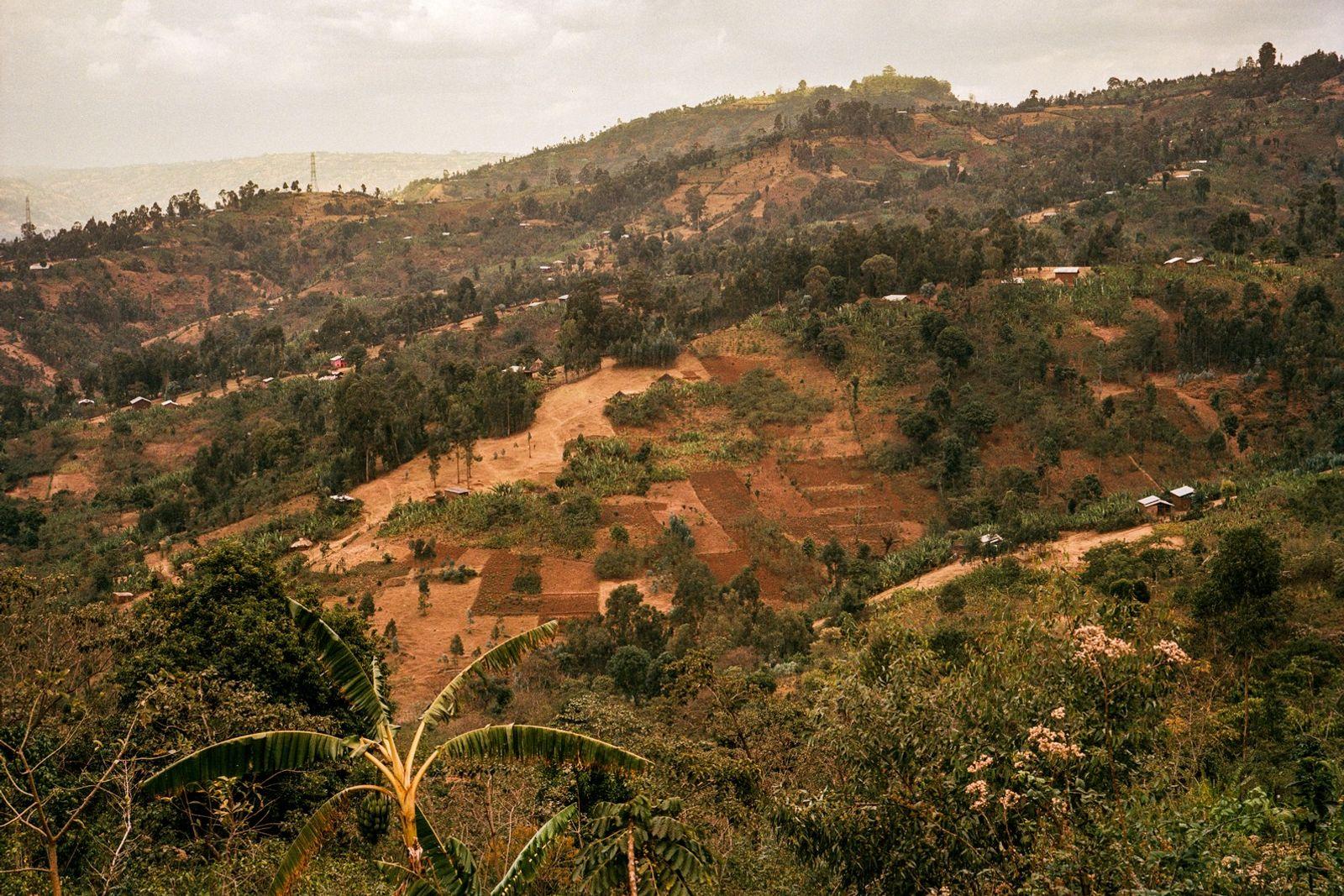 Etiopía es considerada como la cuna genética del café arábica, donde el cultivo lleva practicándose y ...