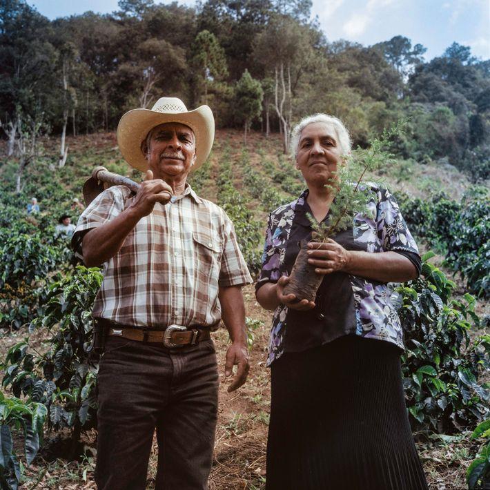 Como parte de su formación, vecinos y caficultores colocan plantones en el campo de prácticas de ...