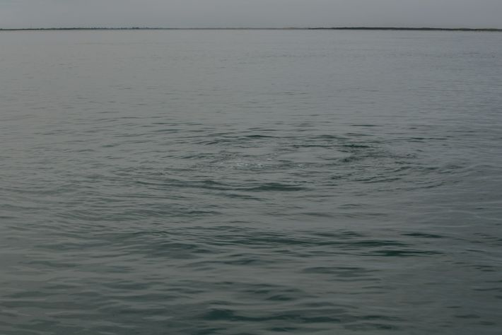 grey-whales-12