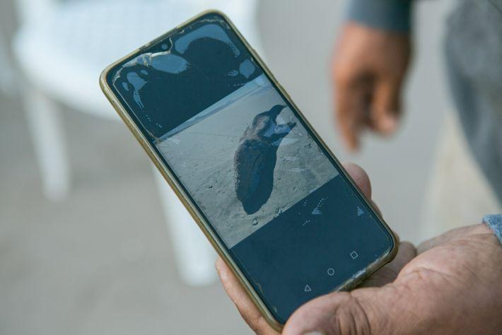 Víctor de la Toba Miranda enseña una foto de una ballena gris varada