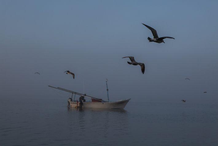 Un pescador recoge las gambas de su red