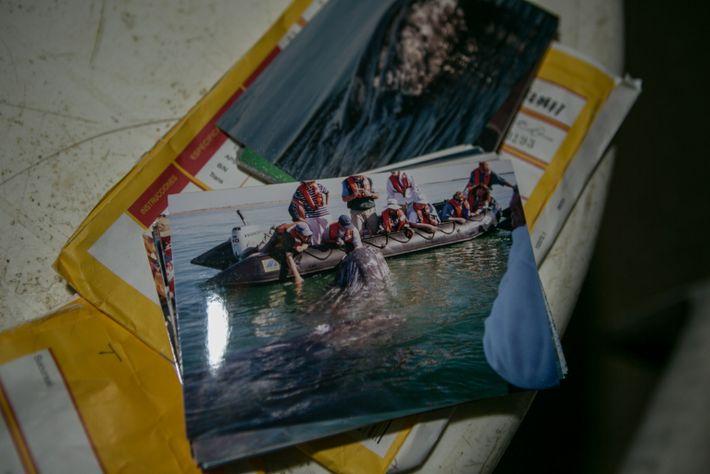 Fotografía de turistas tocando a una ballena gris