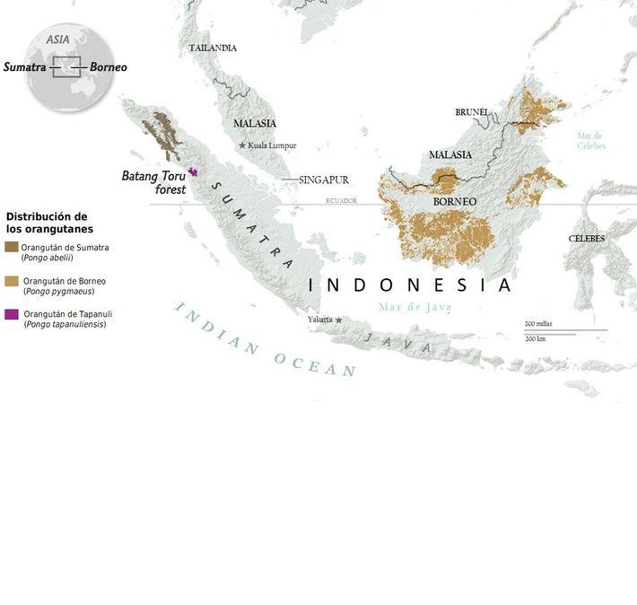 Distribución de los orangutanes
