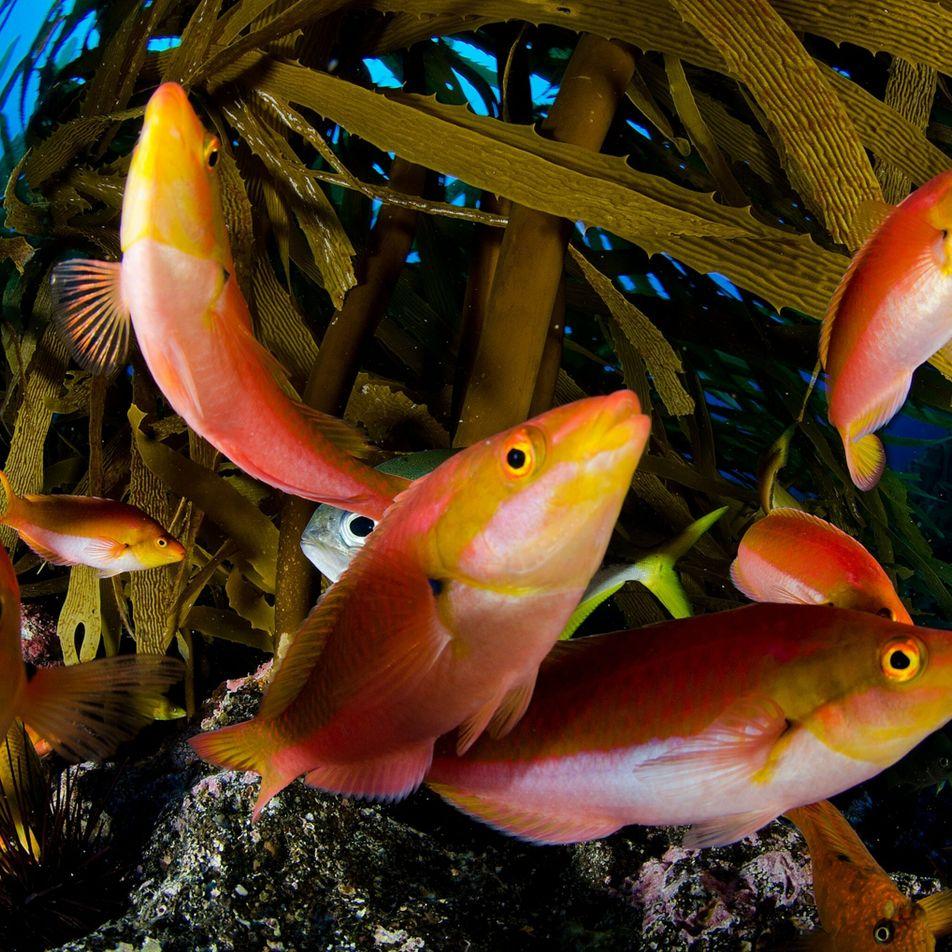 Hay que proteger los océanos ya: un nuevo proyecto podría ayudar a los países a alcanzar ...