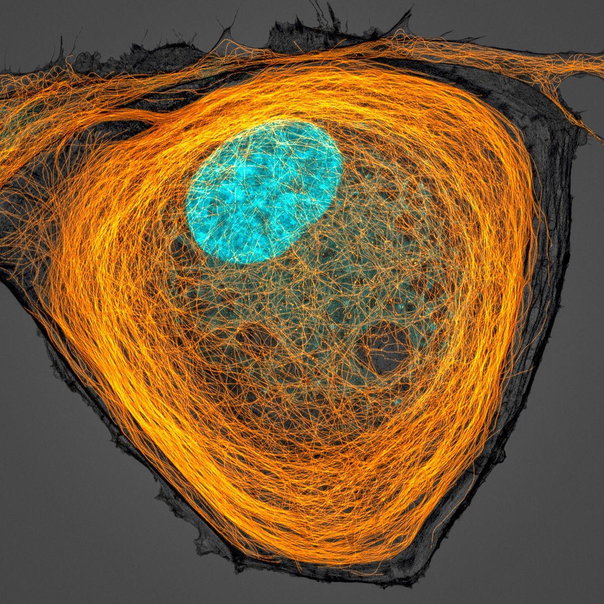 Célula humana