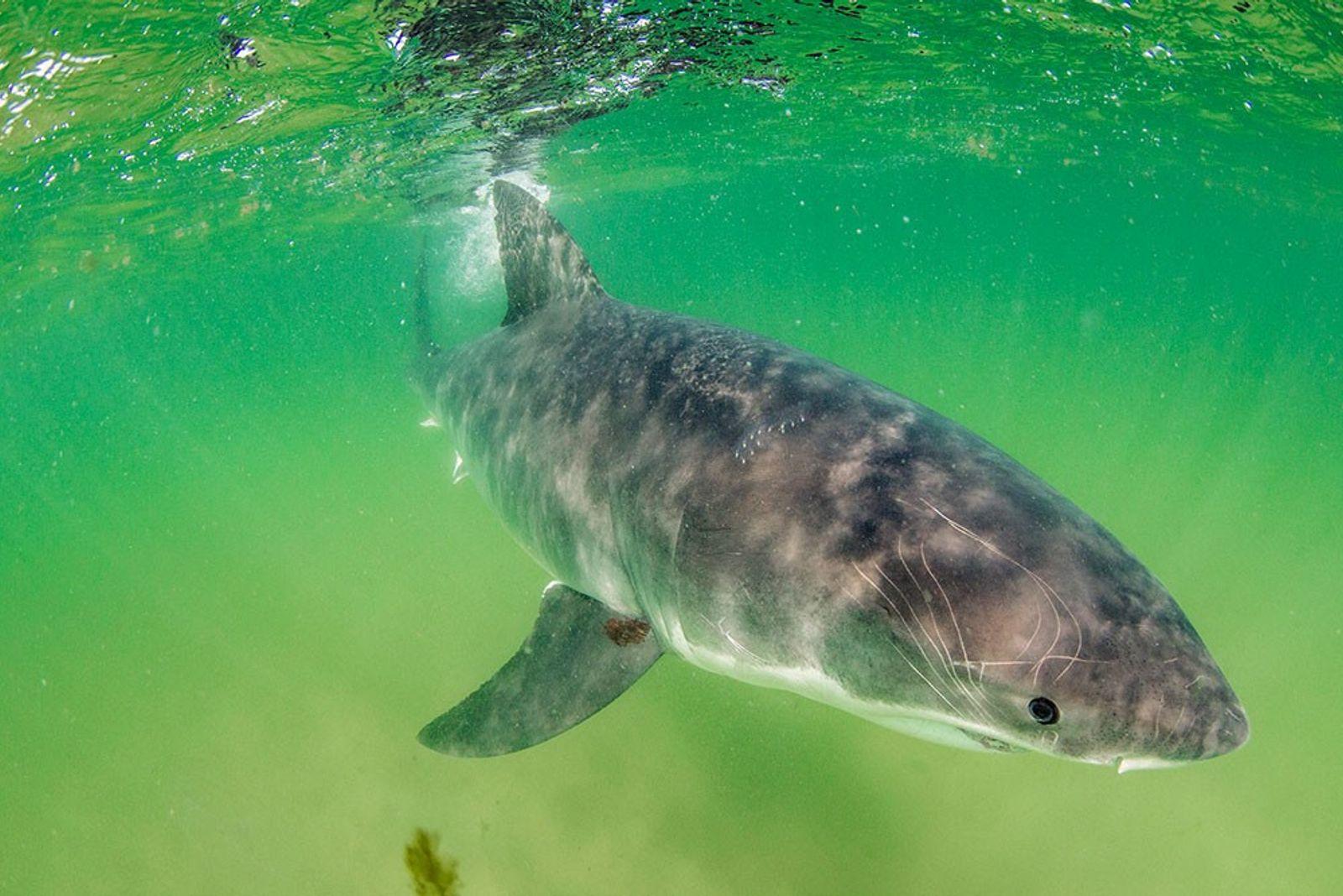 Este fotógrafo de tiburones pide prudencia tras un ataque mortal